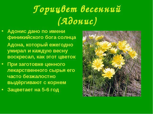 Горицвет весенний (Адонис) Адонис дано по имени финикийского бога солнца Адон...