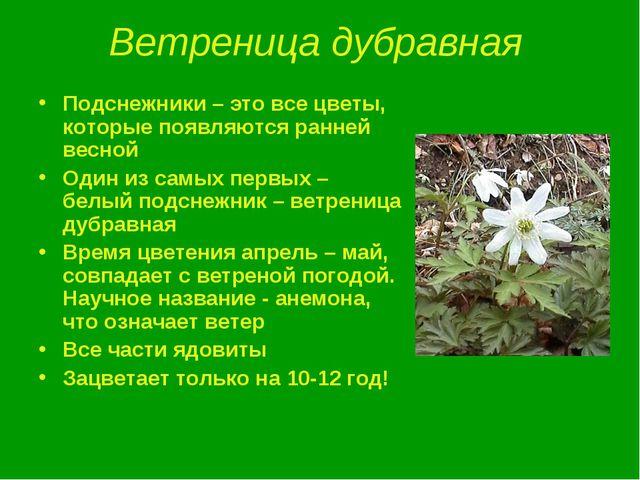 Ветреница дубравная Подснежники – это все цветы, которые появляются ранней ве...