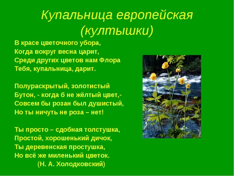 Купальница европейская (култышки) В красе цветочного убора, Когда вокруг весн...