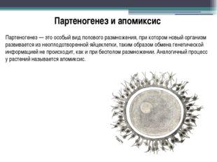 Партеногенез и апомиксис Партеногенез — это особый вид полового размножения,