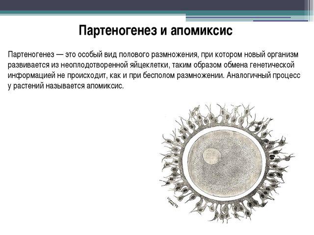 Партеногенез и апомиксис Партеногенез — это особый вид полового размножения,...