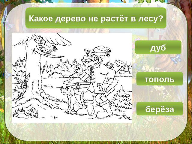 Какое дерево не растёт в лесу? дуб тополь берёза