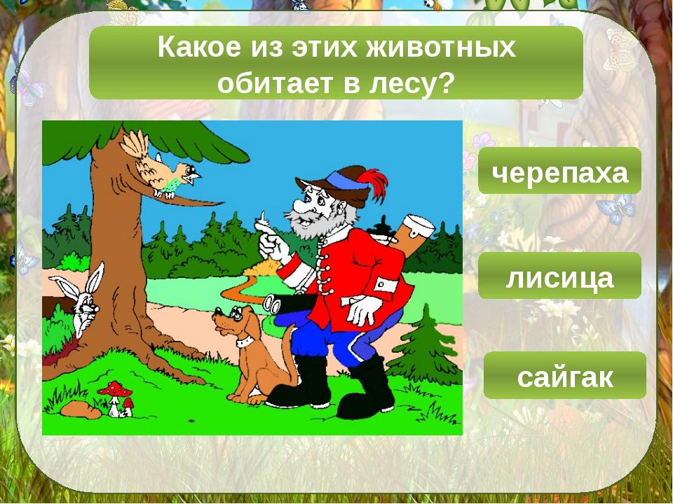 Какое из этих животных обитает в лесу? сайгак лисица черепаха