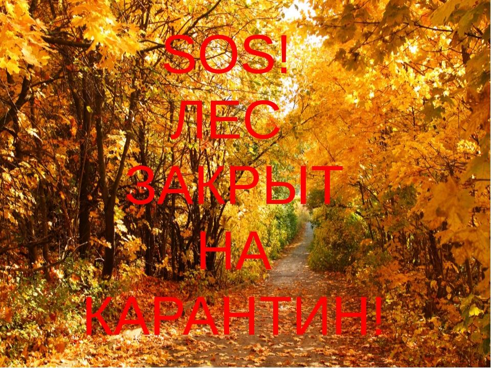 SOS! ЛЕС ЗАКРЫТ НА КАРАНТИН!