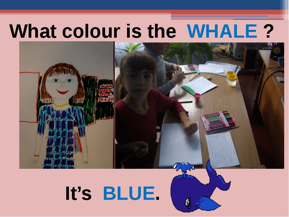 What colour is the WHALE ? It's BLUE.