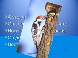 А это, что за птица? Он в своей лесной палате Носит черненький халатик. Он де