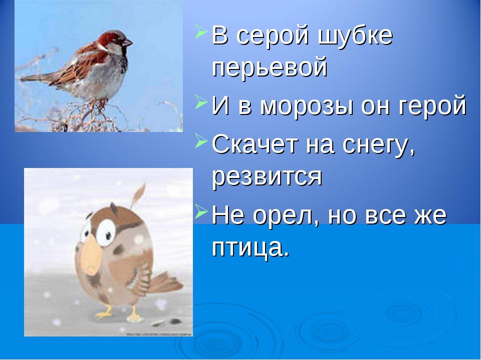 В серой шубке перьевой И в морозы он герой Скачет на снегу, резвится Не орел,...