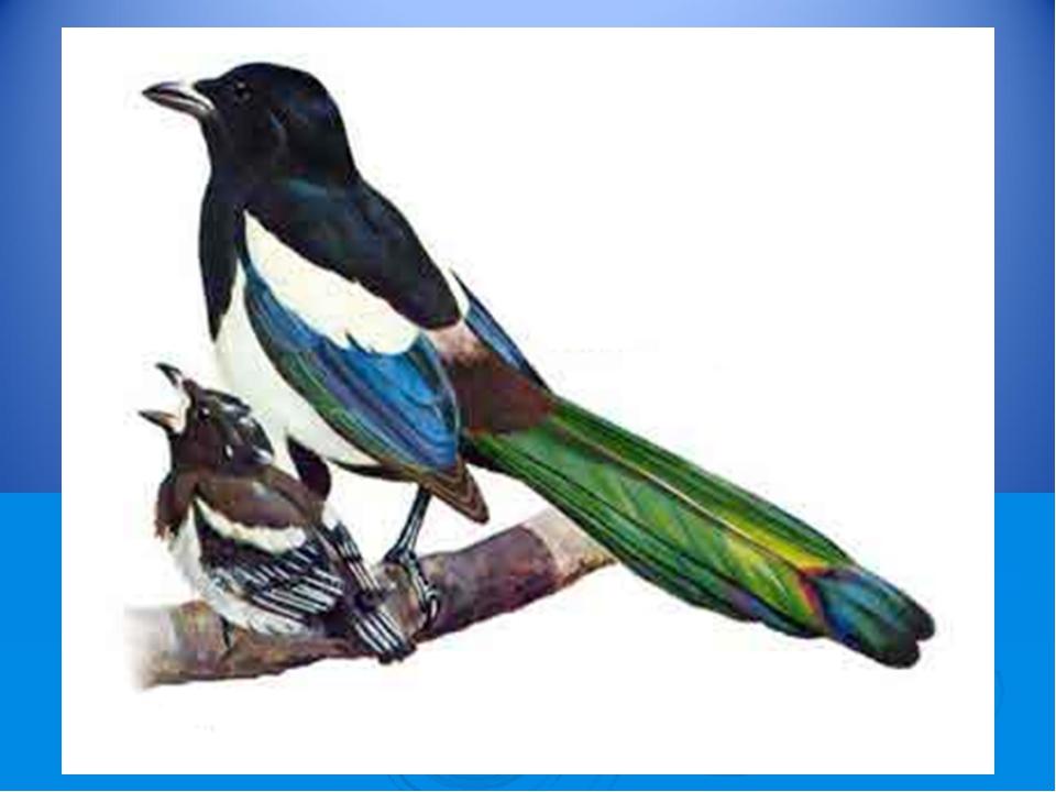 Угадай! «Какая птица как поет?» Кто стрекочет?