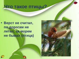 Верст не считал, по дорогам не летал, за морем не бывал (птица) Что такое пти