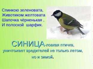 СИНИЦА-ловкая птичка, уничтожает вредителей не только летом, но и зимой. Спин