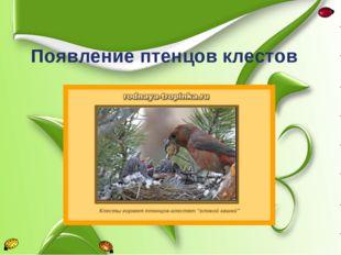 Появление птенцов клестов