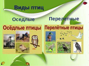 Виды птиц Оседлые Перелетные