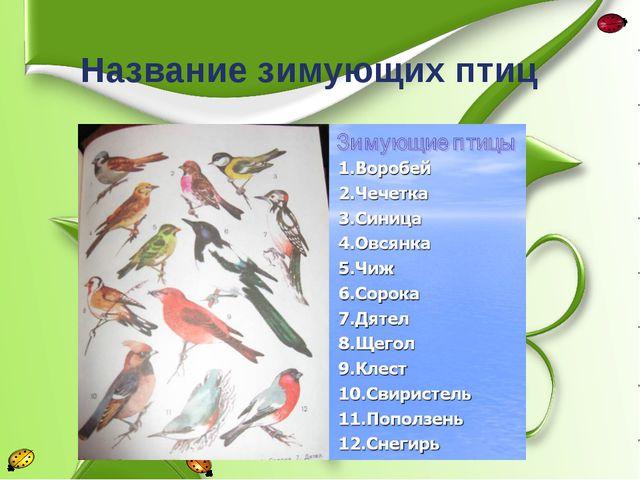 Название зимующих птиц