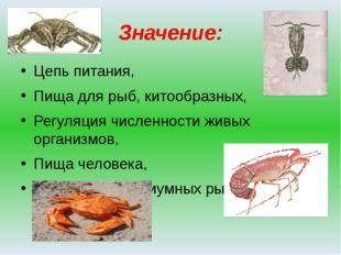 Значение: Цепь питания, Пища для рыб, китообразных, Регуляция численности жив
