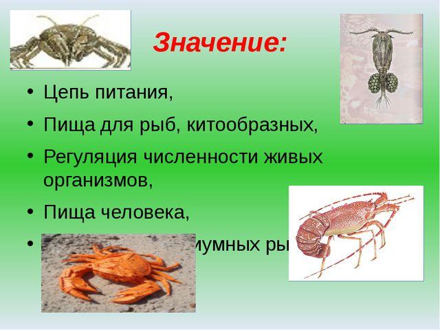 Значение: Цепь питания, Пища для рыб, китообразных, Регуляция численности жив...
