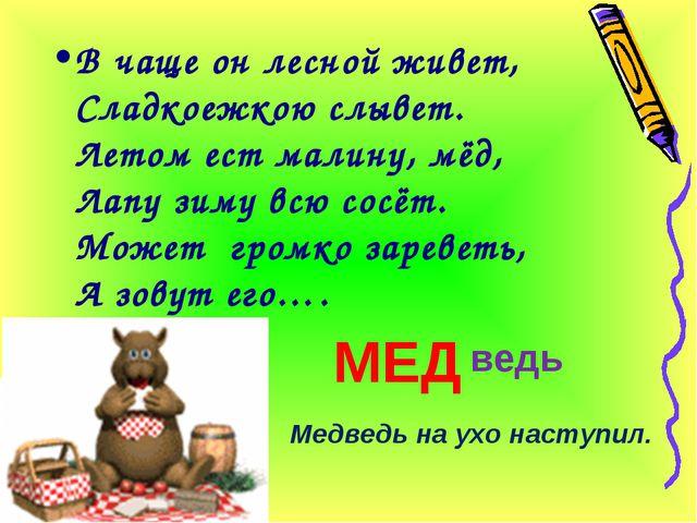 В чаще он лесной живет, Сладкоежкою слывет. Летом ест малину, мёд, Лапу зиму...