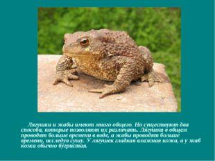 Лягушки и жабы имеют много общего. Но существуют два способа, которые позвол