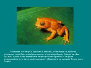 Например, некоторые древесные лягушки, обитающие в районах тропиков, никогда