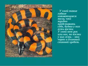У змей такие гибкие извивающиеся тела, что трудно представить себе, будто у