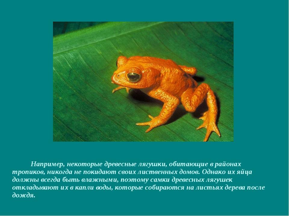 Например, некоторые древесные лягушки, обитающие в районах тропиков, никогда...