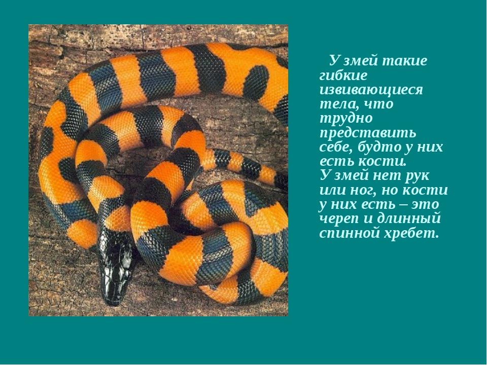 У змей такие гибкие извивающиеся тела, что трудно представить себе, будто у...