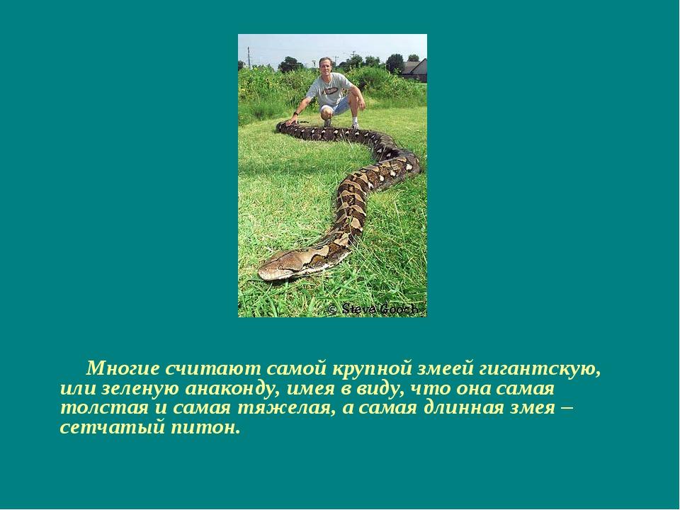 Многие считают самой крупной змеей гигантскую, или зеленую анаконду, имея в...