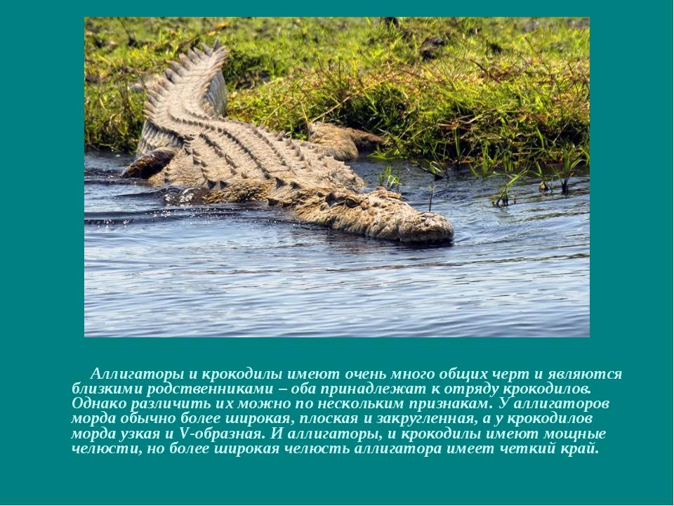 Аллигаторы и крокодилы имеют очень много общих черт и являются близкими родс...