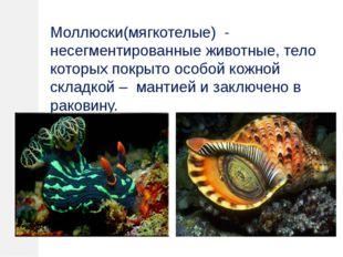 Моллюски(мягкотелые) - несегментированные животные, тело которых покрыто особ