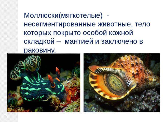 Моллюски(мягкотелые) - несегментированные животные, тело которых покрыто особ...