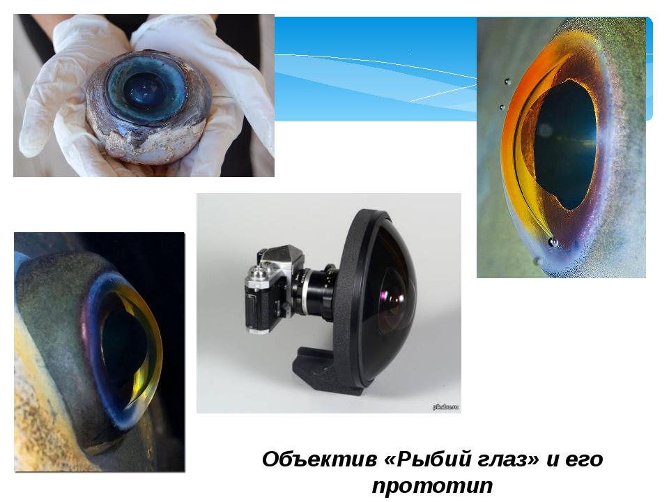 Объектив «Рыбий глаз» и его прототип