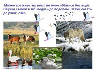 Майже все живе на землі не може обійтися без води. Звірині стежки в лісі вед