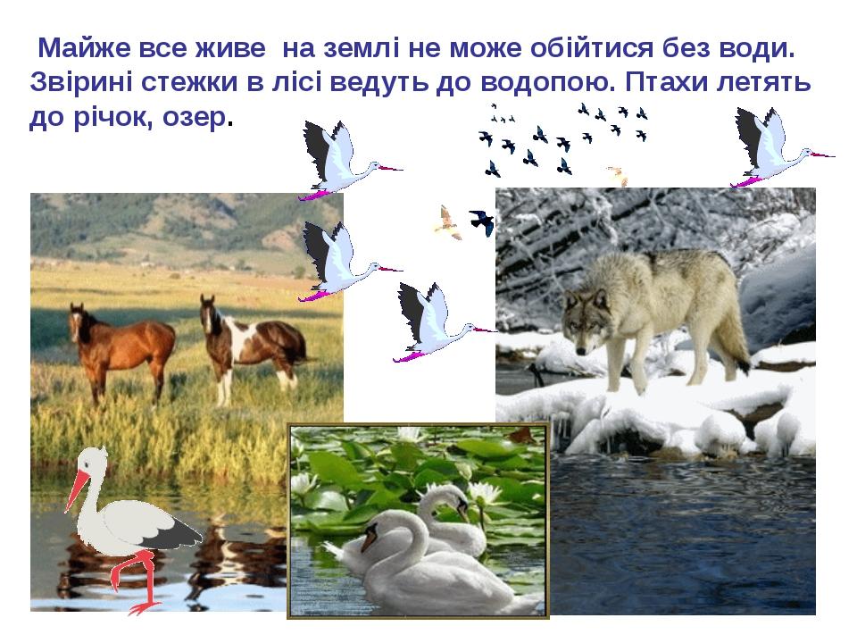 Майже все живе на землі не може обійтися без води. Звірині стежки в лісі вед...