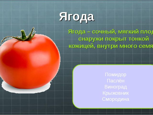 Ягода Ягода – сочный, мягкий плод, снаружи покрыт тонкой кожицей, внутри мног...