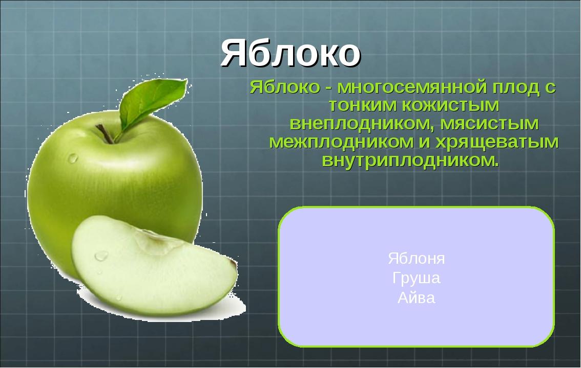 Яблоко Яблоко - многосемянной плод с тонким кожистым внеплодником, мясистым м...