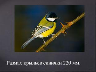 Размах крыльев синички 220 мм.