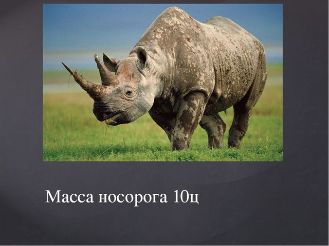 Масса носорога 10ц