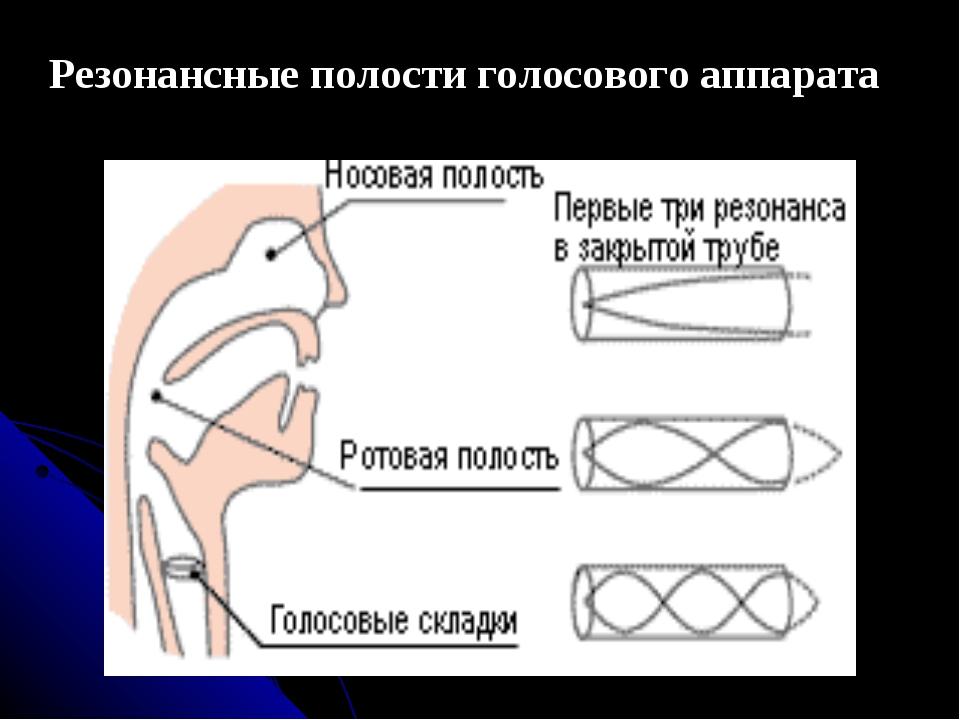 Резонансные полости голосового аппарата