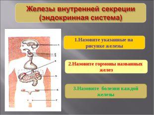2.Назовите гормоны названных желез 1.Назовите указанные на рисунке железы 3.Н