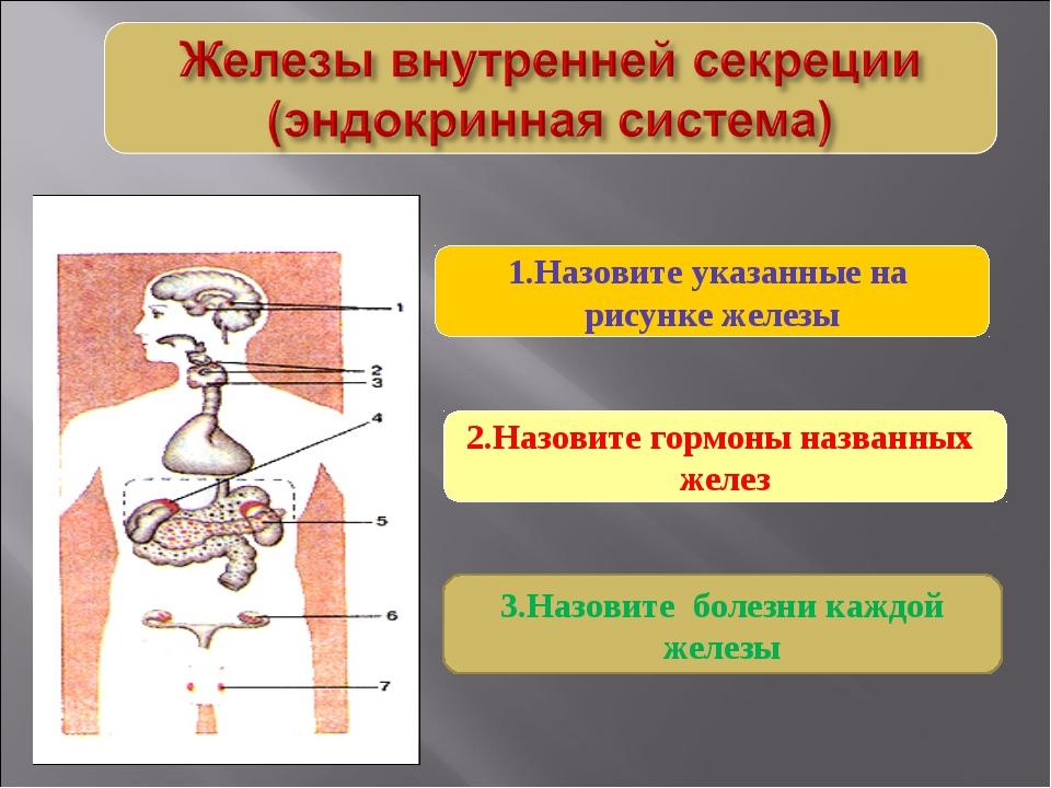 2.Назовите гормоны названных желез 1.Назовите указанные на рисунке железы 3.Н...