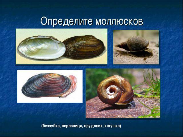 Определите моллюсков (беззубка, перловица, прудовик, катушка)