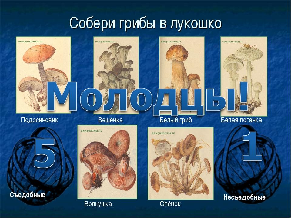 Собери грибы в лукошко Белый гриб Белая поганка Опёнок Подосиновик Волнушка В...