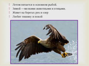 Летом питается в основном рыбой. Зимой—мелкими животными и птицами. Живет на