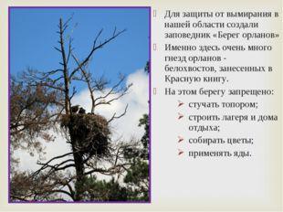 Для защиты от вымирания в нашей области создали заповедник «Берег орланов» Им