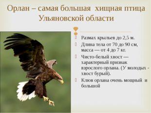 Размах крыльев до2,5 м. Длина тела от70 до90 см, масса— от4 до7 кг. Чис