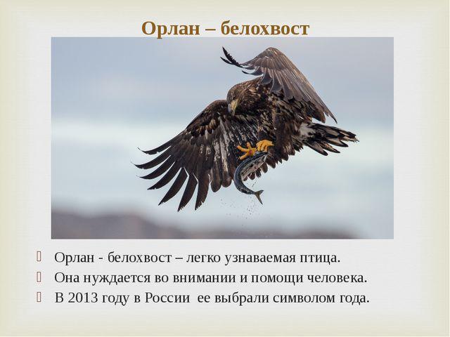 Орлан - белохвост – легко узнаваемая птица. Она нуждается во внимании и помощ...