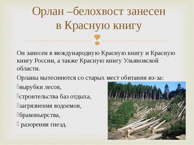 Он занесен в международную Красную книгу иКрасную книгу России, а также Крас...