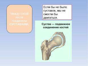 Между собой кости соединены СУСТАВАМИ. Если бы не было суставов, мы не смогли