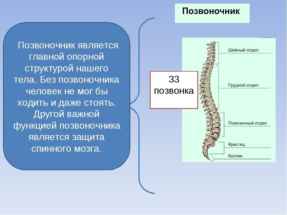 Позвоночник является главной опорной структурой нашего тела. Без позвоночник...
