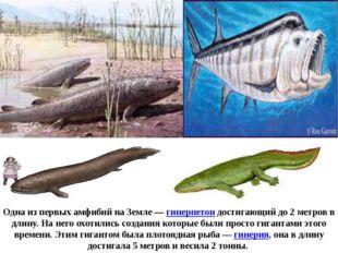 Одна из первых амфибий на Земле—гинерпетон достигающий до 2 метров в длину.
