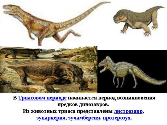 ВТриасовом периоденачинается период возникновения предков динозавров. Из жи...